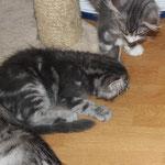 Hieronymus und Homer 11 Wochen alt