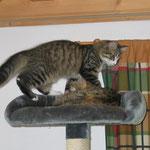 Camillo 4,5 Monate alt