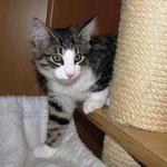 Violetta 12 Wochen alt