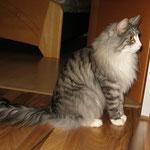 Figaro 2 Jahre und 2 Monate alt