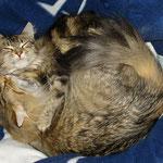 Amelie 1 Jahr und 11 Monate alt mit Coonie Daisy