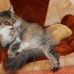 Amelie 12 Jahre und 5 Monate alt
