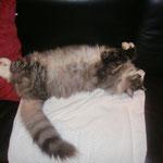 Osiris 3 Jahre und 9 Monate alt