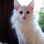 Noshi 3 Monate alt