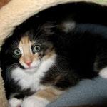 Leticia 10 Wochen alt