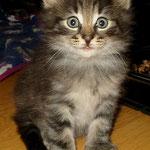Barney 6 Wochen alt
