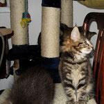 Ikarus 10 Wochen alt