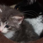 Hieronymus 5 Wochen alt