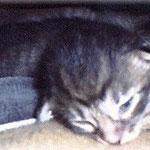 Amelie 2 Wochen alt