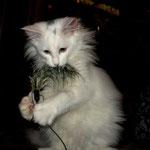 Noshi  4 Monate alt