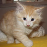 Tristan 6 Wochen alt