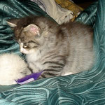 Athina 6 Wochen alt
