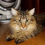 Peppone 2 Jahre und 5 Monate alt