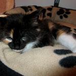 Lucy 8 Wochen alt