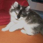 Calypso 8 Wochen alt