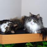 Figaro und Flint 2 Jahre alt
