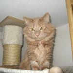 Pierroth 2 Jahre und 9 Monate alt