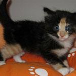 Leticia 6 Wochen alt