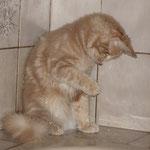 Pierroth 16 Wochen alt