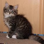 Caruso 12 Wochen alt