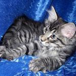 Humphrey 12 Wochen alt