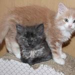 Galathea und Georgia 7 Wochen alt