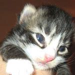Camillo 2 Wochen alt