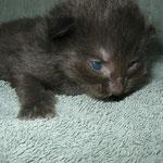 Bonnie 2 Wochen alt
