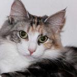 Olympia  1 Jahr und 7 Monate alt