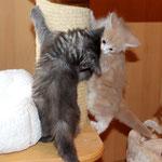Galathea mit Schwestern 6 Wochen  alt