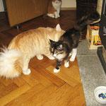 Tristan 1 Jahr und 4 Monate alt mit Whoopi 4 Monate alt