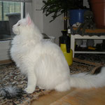 Noshi  8 Monate alt