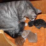 G2-Wurf 1 Woche alt mit Tante Diana