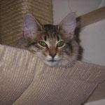 Penelope 4 Monate alt