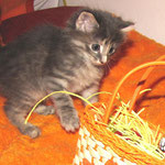 Rhapsodie 6 Wochen alt