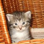 Elias 4 Wochen alt
