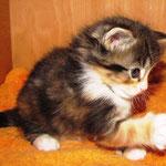 Yasmine 6 Wochen alt