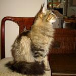 Daisy 2 Jahre und 9 Monate alt