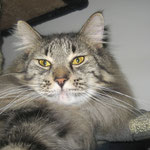 Cosmo 4 Jahre und 7 Monate  alt