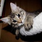 Peppone 12 Wochen alt