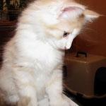 Tristan 8 Wochen alt