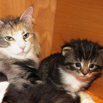 Olympia  3 Jahre und 5 Monate alt mit Yoko 3 Wochen alt