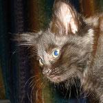 Bonnie 10 Wochen alt