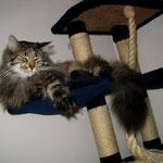 Cosmo 3 Jahre und 1 Monate  alt