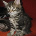 Giacomo 8 Wochen alt