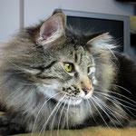Cosmo 3 Jahre und 9 Monate  alt