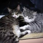 Flint und Figaro 5 Monate alt