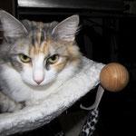 Olympia 5 Monate alt