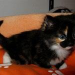 Lucy 6 Wochen alt