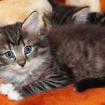 Caruso 6 Wochen alt